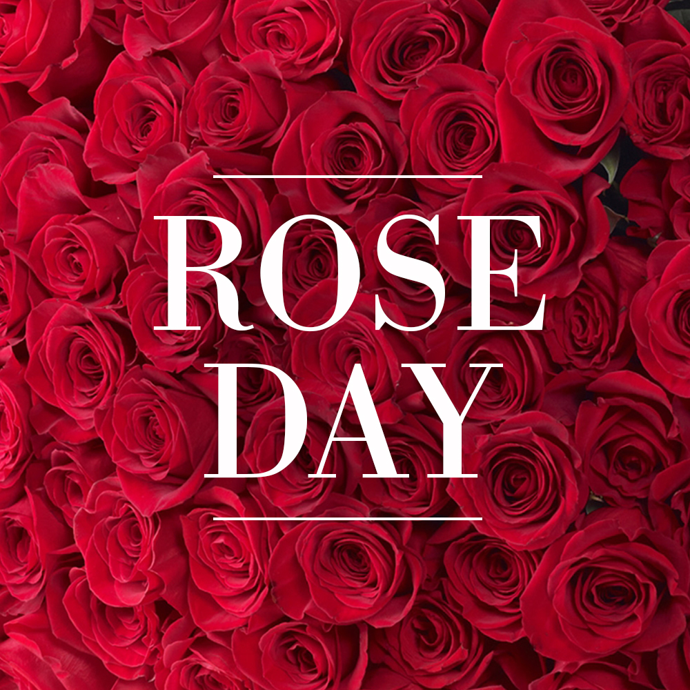 Happy Rose Day 2019 Know The Meaning And Significance Behind Each