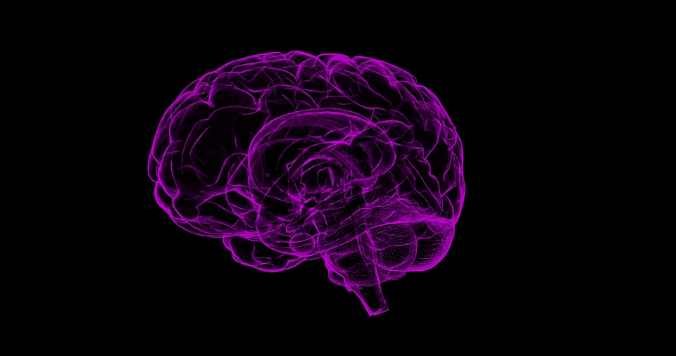 Electrical impulse travels at high speed in the human brain; Read on to know more