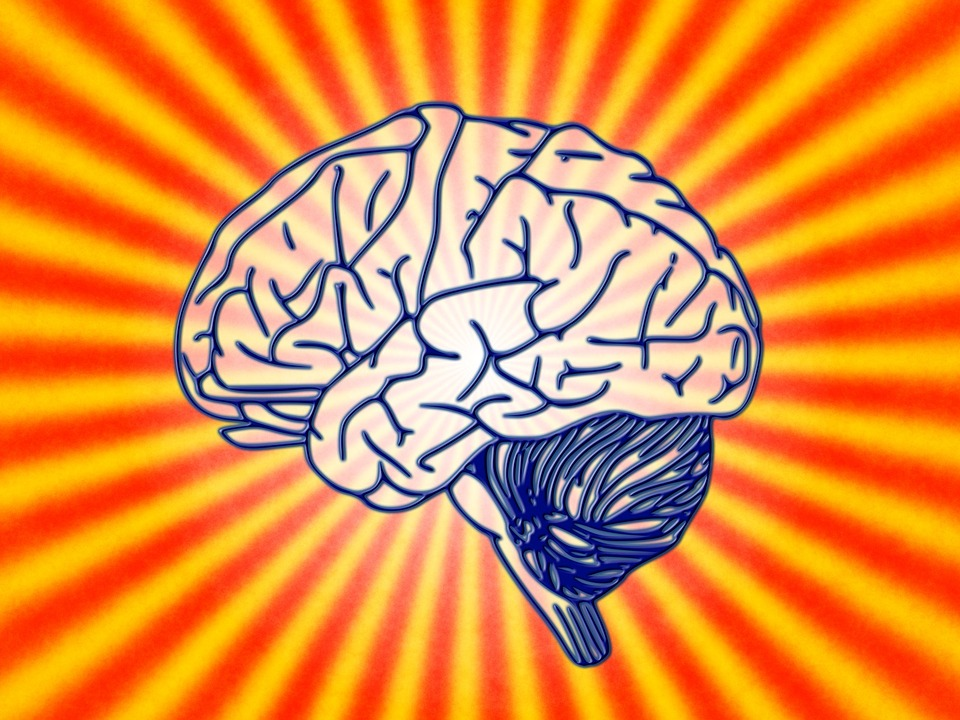 Healthy diet for brain: THESE foods will boost your brain health