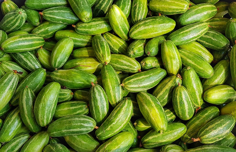 Health Benefits of Pointed Gourd: THIS is how it aids in weight loss