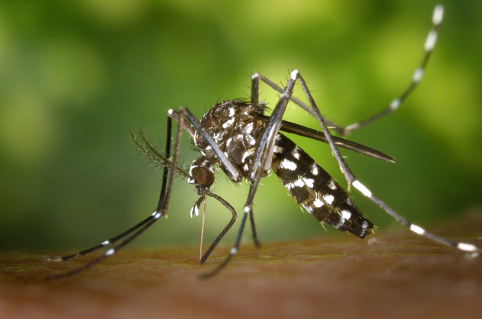 Worried about mosquito borne diseases? Check out THESE simple tips for prevention
