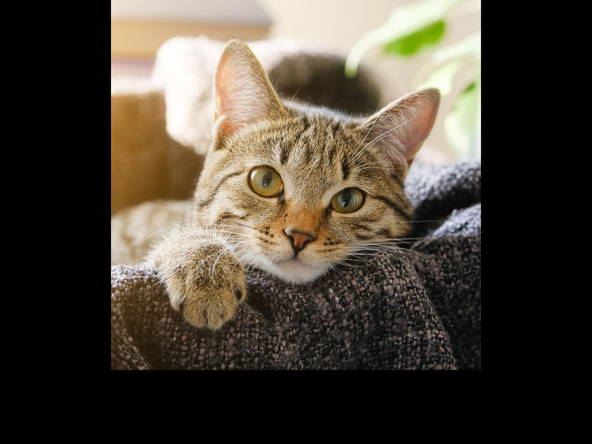 Is Your Cat Sick These Tips Will Help You To Take Care Of Your Ill Feline Pinkvilla