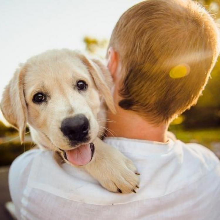 5 Best dog breeds to have for cuddling
