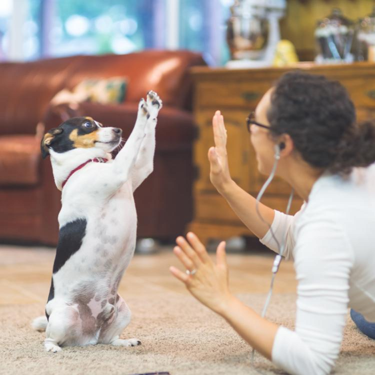 5 Most energetic dog breeds to have as pets for active people