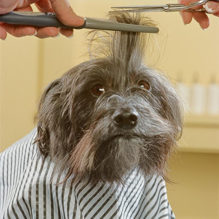6 Easy tips for grooming your dog at home