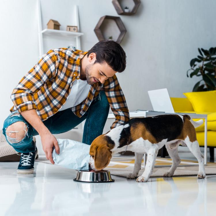 Pet Parenting Tips: 7 healthy foods you can share with your dog