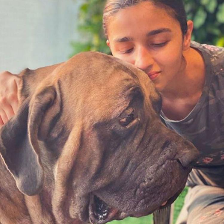Alia Bhatt feels Ranbir Kapoor's dogs 'make everything better' as she shares PAWfect photos with them