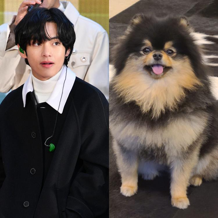 V posted cute photos of his pet dog Yeontan on Weverse for ARMY to gush over.