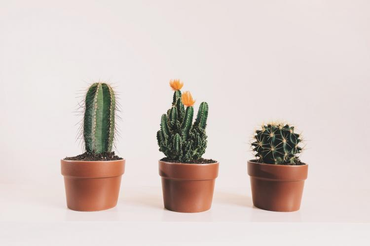 Skin Care Tips: Cactus gel is a MUST have skin care product for smooth and supple skin