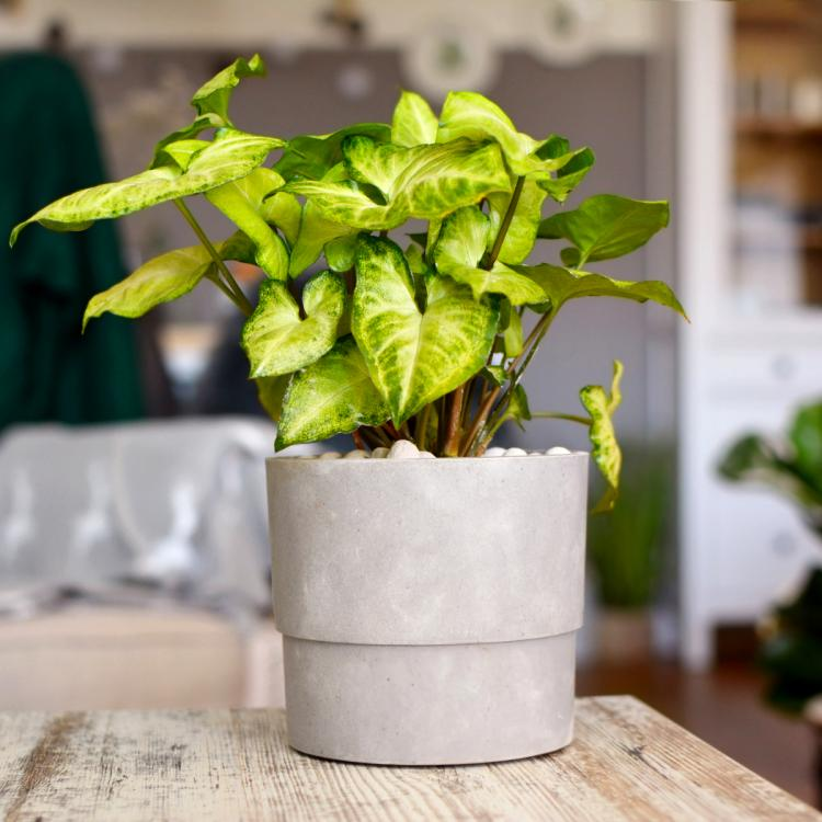 From Pothos To Snake Plant Check Out