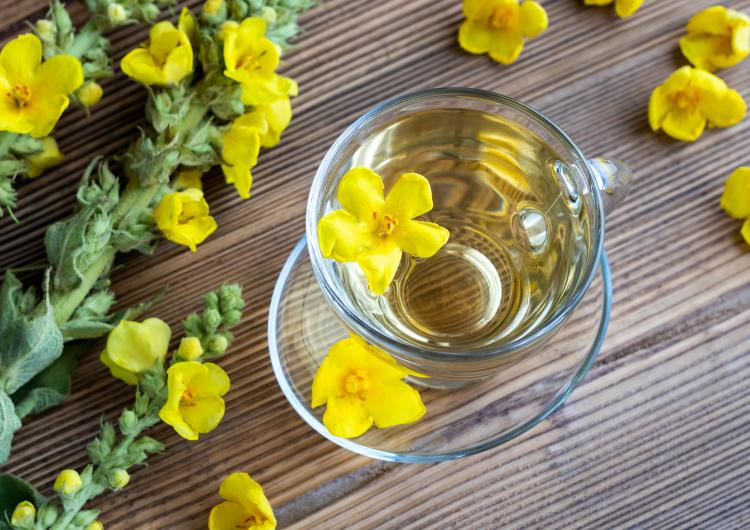 Health Benefits of Mullein Tea: THIS is why you should replace your caffeinated beverage with this herbal tea