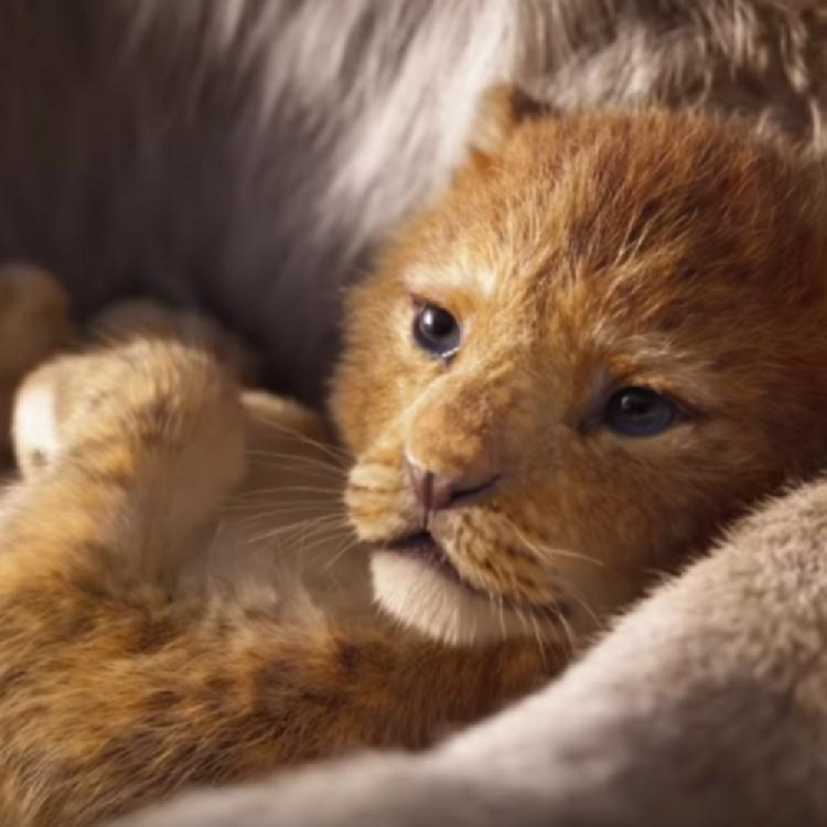 The Lion King Box Office Collection India Day 6: The Disney film has an excellent first week