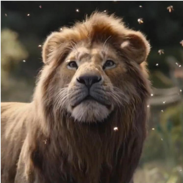 The Lion King Box Office Collection India Day 17: Disney's film records growth on third weekend