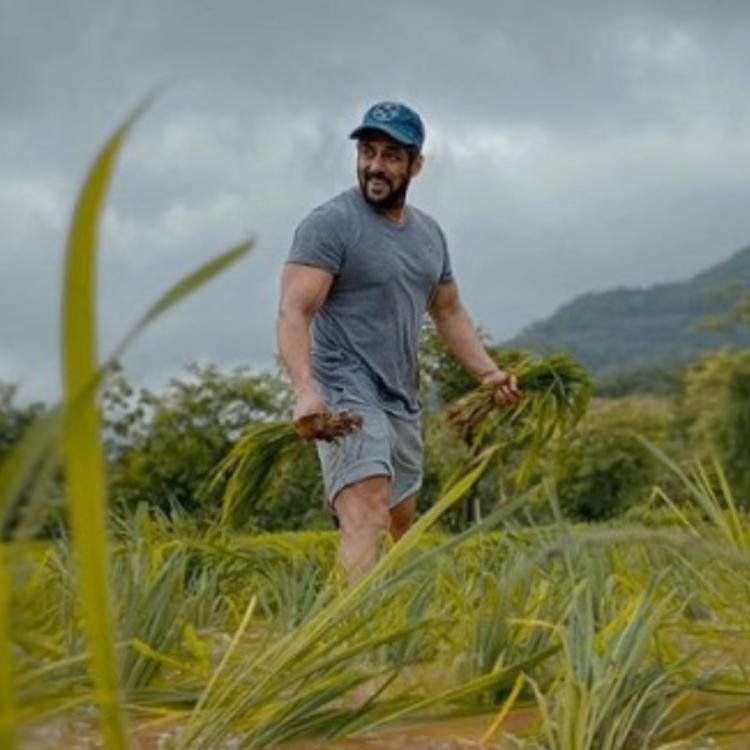 Salman Khan is having a field day as he spends time at a rice farm amid the lockdown; See Pic