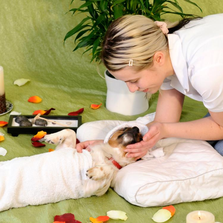 Pet Parenting: How to give your dog a relaxing spa day at home?