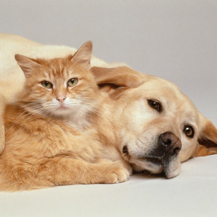 Pets and Human Health: Here's how pets can improve our lifestyle