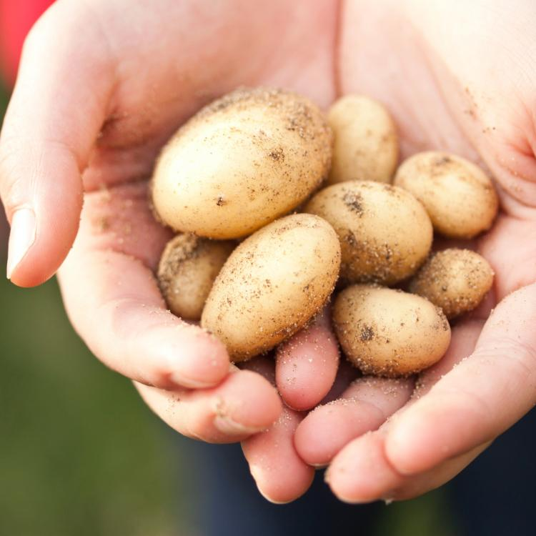 3 easy ways to incorporate the goodness of potatoes in your skincare routine