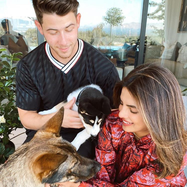 Priyanka Chopra, Nick Jonas' family just got bigger with the addition of a rescue dog: We're already in love