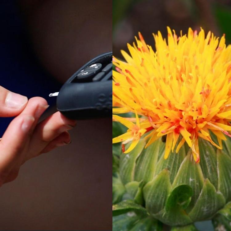 diabetes,Health & Fitness,type 2 diabetes,Safflower Oil