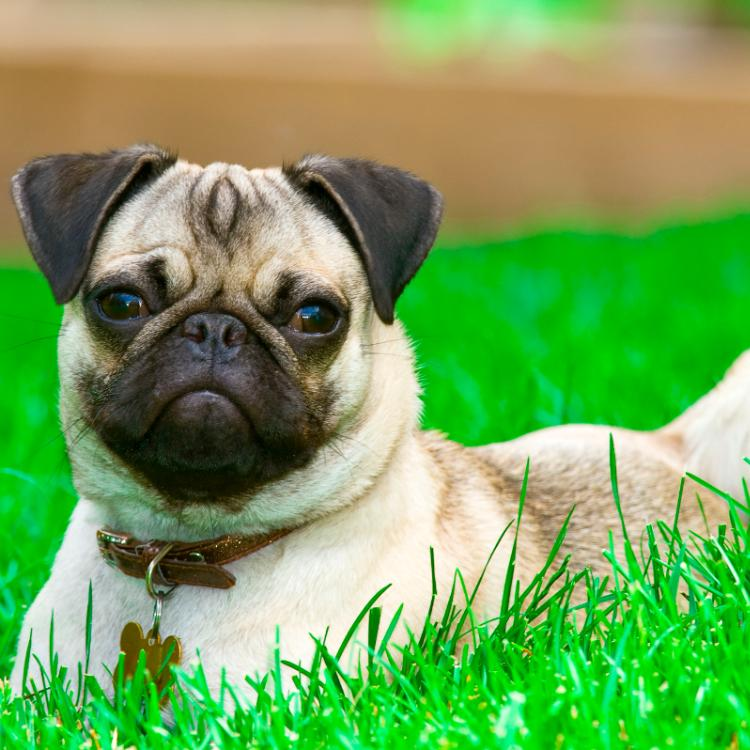 8 Popular small dog breeds for all the new pet owners | PINKVILLA