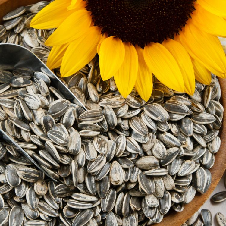 Eat and apply: 2 DIY sunflower seeds masks to bring back the glow