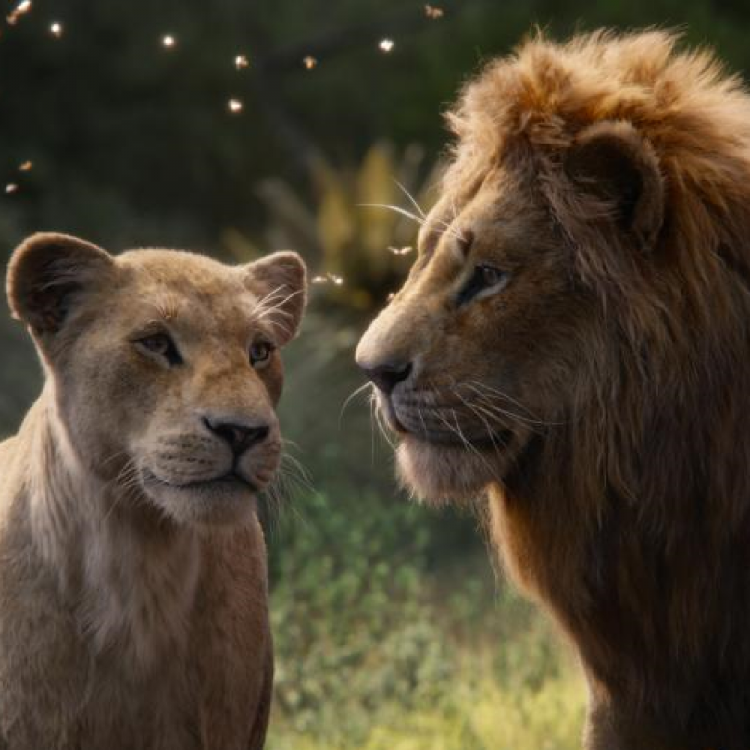 The Lion King Box Office Collection: Disney's live action drama is off to a good start