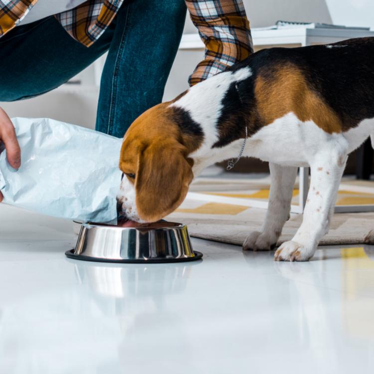 People,pet food,homemade foods for pets,homemade pet food