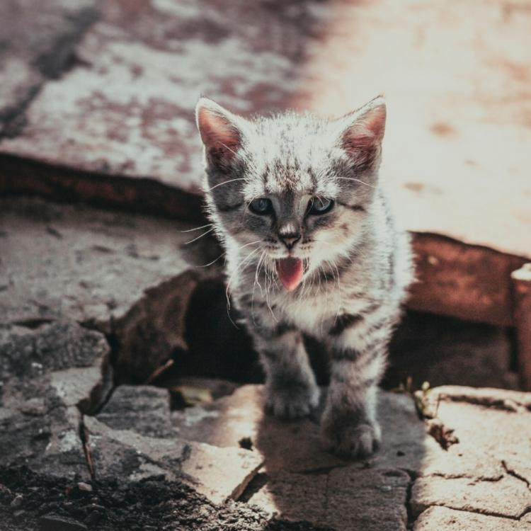 People,pet parenting,cat care,dehydration in cats