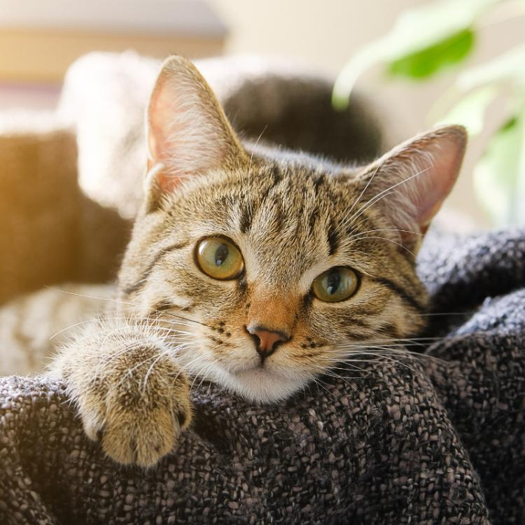 Why do cats have watery eyes and what is the treatment for it?