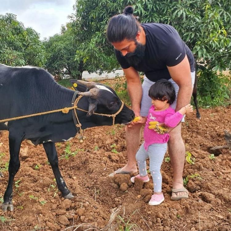 Yash's 'farmhouse diaries' are all about spending time with farm animals & wife Radhika shares proof; See Pic