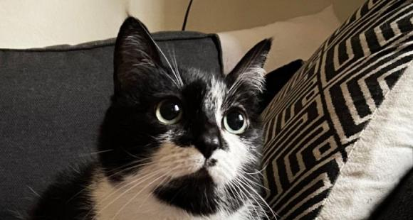 5 Popular and adorable black and white cat breeds