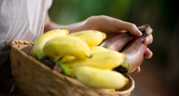 Bananas for Diabetes: Can people suffering from diabetes eat this fruit? Find out