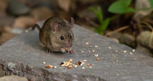 Authorities in a city of China's Inner Mongolia recently issued a warning when a hospital reported a case of suspected bubonic plague. This plague i