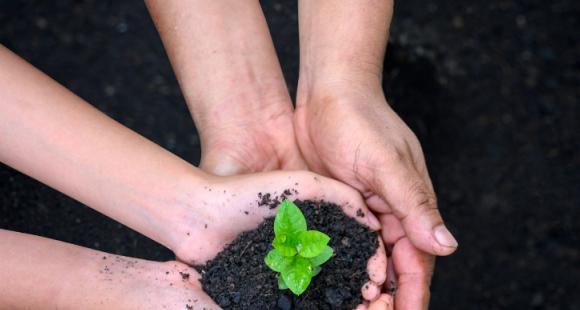 World Soil Day 2020: How to celebrate the day and its ...