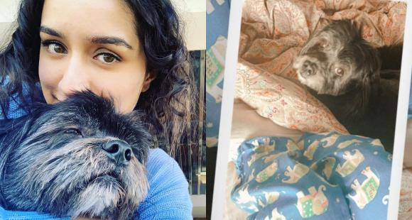 Shraddha Kapoor shares a cute glimpse of her lazy shenanigans with her pawfect 'cuddle buddy' Shyloh - PINKVILLA