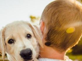 People,Dogs,pet parenting tips,Cushing's Syndrome