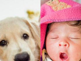 People,pets,parenting tips,newborn baby