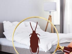 People,home remedies,cockroaches