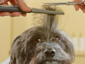 People,pets,Dogs,Haircut