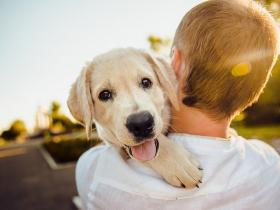 Love & Relationships,love,Friends,Dogs