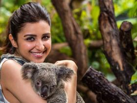 News,parineeti chopra,bollywood actors