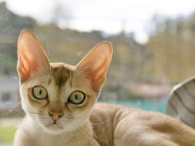 People,pets,pet parenting tips,Poisonous Things for Cats