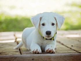 People,pets,Dogs,first aid tips