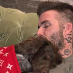 David Beckham's pooch snoozes in a Louis Vuitton blanket which costs a BOMB