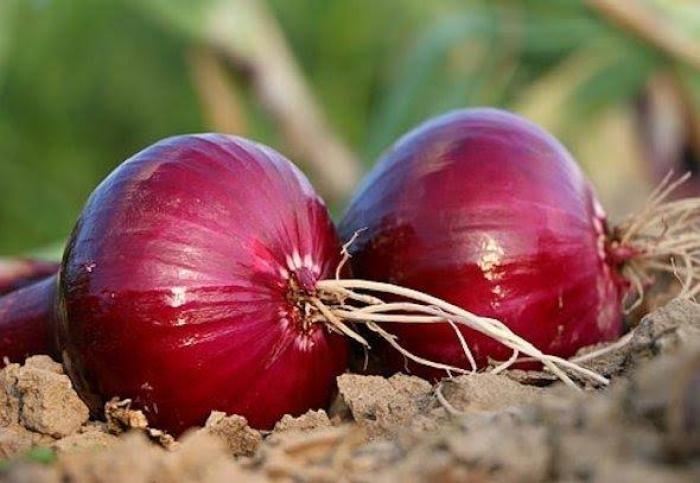 Onion Health Benefits: Here's how adding onions in your diet can keep you HEALTHY