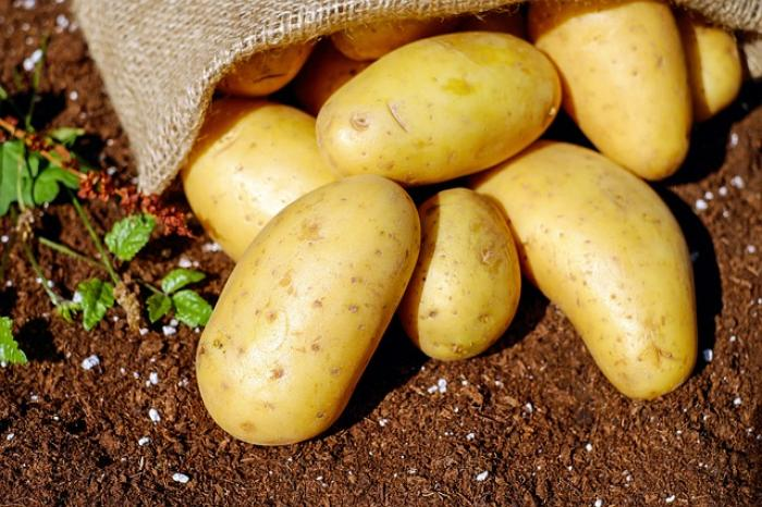 Potatoes Health Benefits: Here are 's how potato works well for your body