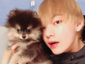 7 Photos of BTS member V and his pet Yeontan which proves Tannie is the cutest dog ever