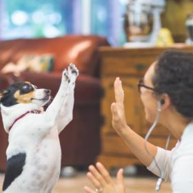 People,pet parenting,Dog Breeds for Hot Weather