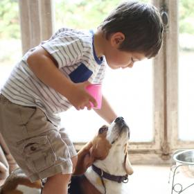 People,pet parenting,dog health,arthritis in dogs