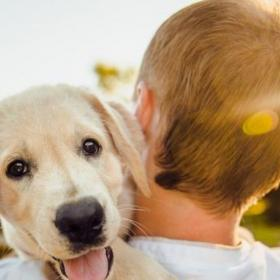 People,Dogs,pet parenting tips,Potty Train